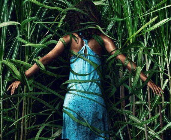 【電影 觀後感】《高草魅聲In the Tall Grass》:考驗邏輯能力的驚悚片